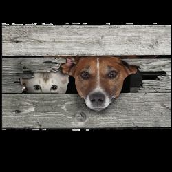 Paillasson Coucou - chien et chat