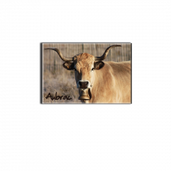 AUBRAC (vache) - magnet frigo
