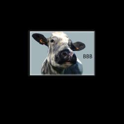 BLANC BLEU BELGE - magnet frigo
