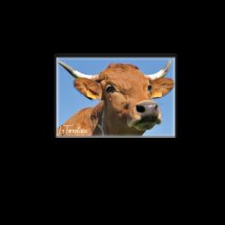 Cow Cow Rico